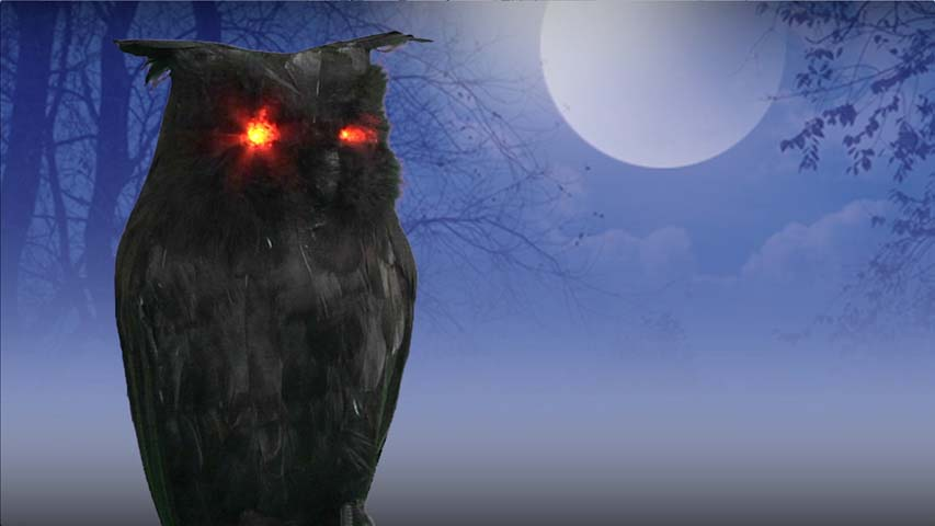 Light Up Black Owl- Halloween Prop